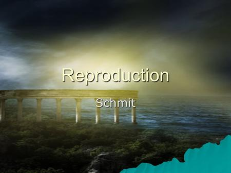 Reproduction Schmit REPRODUCTION AND DEVELOPMENT IN PLANTS Asexual reproduction: - Plants being remade without sex cells (egg or sperm/pollen) - Plants.