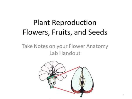 Plant Reproduction Flowers, Fruits, and Seeds Take Notes on your Flower Anatomy Lab Handout 1.