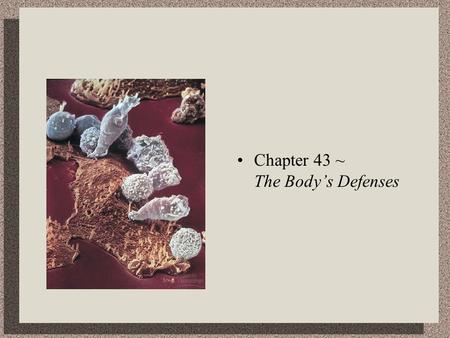 Chapter 43 ~ The Body's Defenses. Lines of Defense Nonspecific Defense Mechanisms……