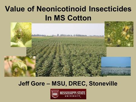 Value of Neonicotinoid Insecticides In MS Cotton Jeff Gore – MSU, DREC, Stoneville.