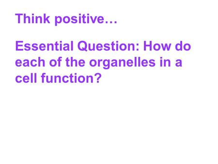 Think positive… Essential Question: How do each of the organelles in a cell function?