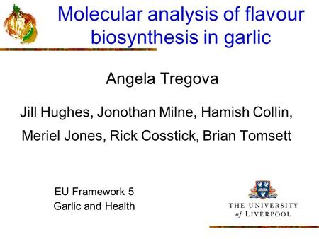 Molecular analysis of flavour biosynthesis in garlic Angela Tregova Jill Hughes, Jonothan Milne, Hamish Collin, Meriel Jones, Rick Cosstick, Brian Tomsett.