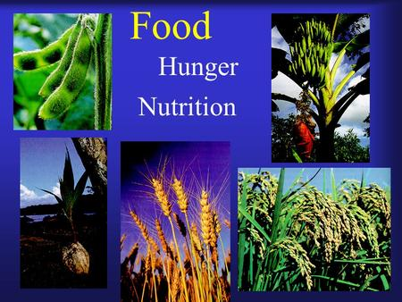 Food Hunger Nutrition. How is food produced? Plants.