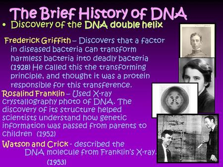The Brief History of DNA DNA double helixDiscovery of the DNA double helix Frederick Griffith – Discovers that a factor in diseased bacteria can transform.