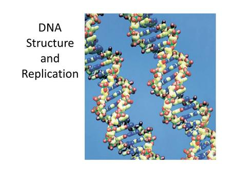 DNA Structure and Replication. History Griffith and Transformation In 1928, British scientist Fredrick Griffith was trying to learn how certain types.