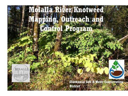 Molalla River Knotweed Mapping, Outreach and Control Program Clackamas Soil & Water Conservation District.