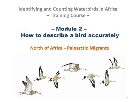 – Module 2 – How to describe a bird accurately North of Africa - Palearctic Migrants Identifying and Counting Waterbirds in Africa – Training Course –