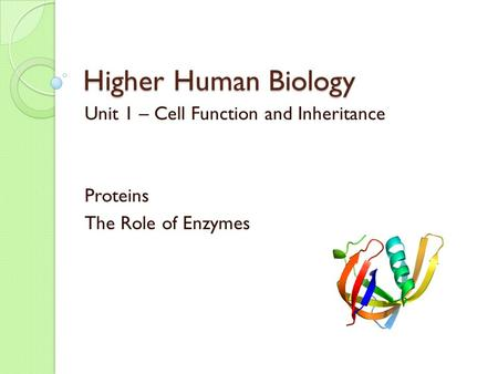 Higher Human Biology Unit 1 – Cell Function and Inheritance Proteins The Role of Enzymes.