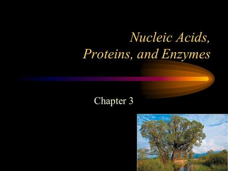 Nucleic Acids, Proteins, and Enzymes