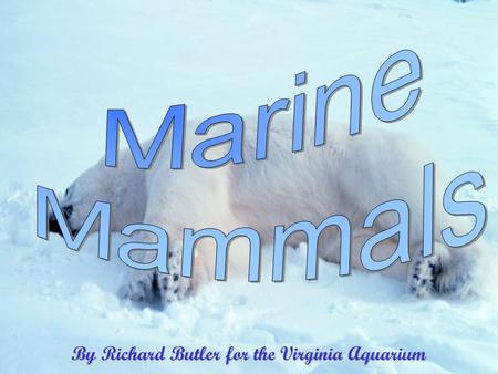 By Richard Butler for the Virginia Aquarium Created by Phyllis Butler 10/3/20152 Marine Mammals Cetaceans Toothed Whales Baleen Whales DolphinsPorpoisesSireniaManateeDugong.