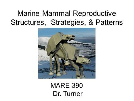 Marine Mammal Reproductive Structures, Strategies, & Patterns MARE 390 Dr. Turner.