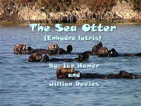 The Sea Otter (Enhydra lutris) By: Ian Hamer and Jillian Davies.