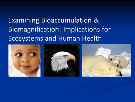 Examining Bioaccumulation & Biomagnification: Implications for Ecosystems and Human Health.
