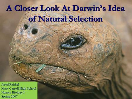 A Closer Look At Darwin's Idea of Natural Selection Jarod Raithel Mary Carroll High School Honors Biology I Spring 2007.
