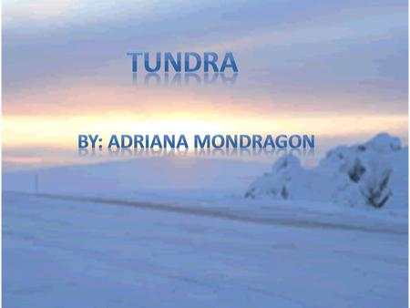 The Tundra Biome It's the coldest of all biomes and us noted for its frost-molded landscapes, extremely low temperatures, little precipitation, poor nutrients,