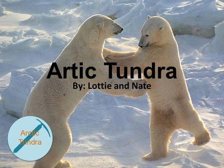 Artic Tundra By: Lottie and Nate Arctic Tundra. Map.