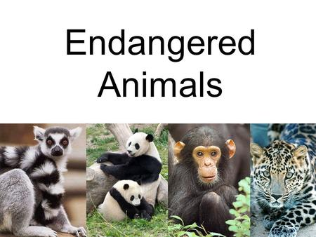 Endangered Animals. Different font styles used for every word Different colours used for every word.