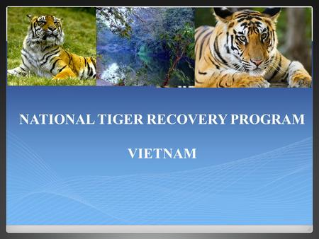 NATIONAL TIGER RECOVERY PROGRAM VIETNAM. Wild tigers and their preys are recovering through significant reduction of the threats they face OVERALL GOAL.