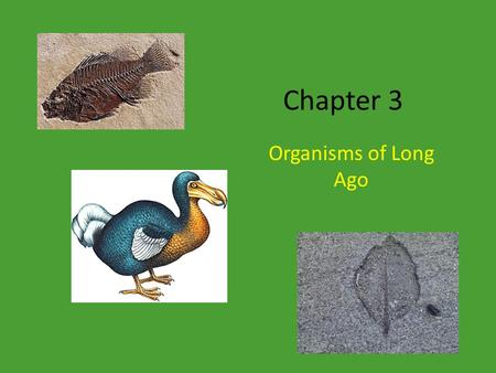Chapter 3 Organisms of Long Ago.