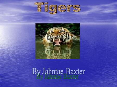 TTigers are an endangered species. WWild tigers in Asia -- their natural habitat -- may soon disappear. TTigers keep their claws sharp for.
