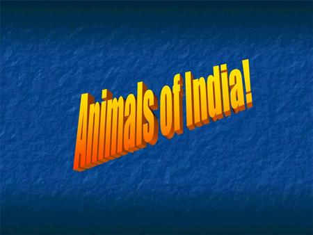 The National Animal of India The national animal of India is the Tiger Indian tigers are famous all over the world and one of the main attractions for.