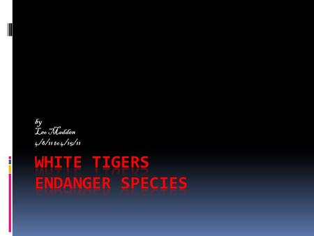 By Leo Madden 4/8/11 to 4/15/11. Why are white tiger endanger White tigerfacts  Men are getting on tiger turf.  Men are illegally hunting tigers. 