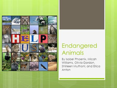 Endangered Animals By Isobel Phoenix, Micah Williams, Olivia Gordon, Shirleen Muthoni, and Erica Anton.