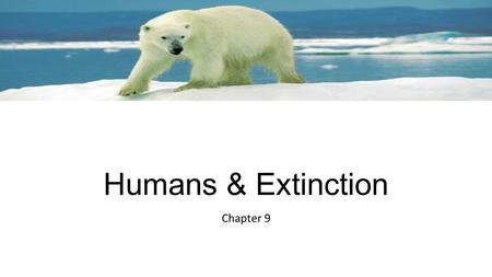 Humans & Extinction Chapter 9. Extinction -Natural -All species become extinct  Mass Extinction-extinction of many species in a relatively short period.