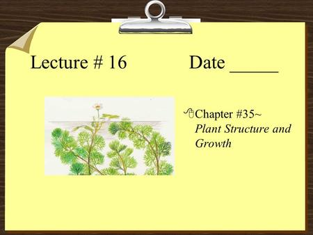 Lecture # 16 Date _____ 8Chapter #35~ Plant Structure and Growth.