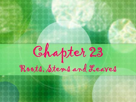 Chapter 23 Roots, Stems and Leaves. Section 23-1 Learning Targets Describe the organs and tissues of vascular plants Identify the specialized cells of.