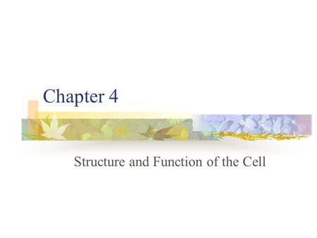Chapter 4 Structure and Function of the Cell. 4-1 Introduction to the Cell Biology – The study of life Bio – life Ology – study of Cell – smallest unit.
