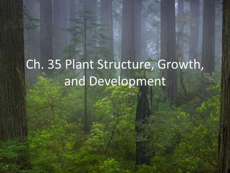Ch. 35 Plant Structure, Growth, and Development. Plants have a hierarchical organization consisting of organs, tissues, and cells Vascular plants have.