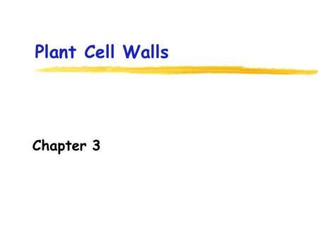 Plant Cell Walls Chapter 3. Where is the cell wall of plant cells located? A.Inside the plasma membrane B.Outside the plasma membrane C.Between the plasma.