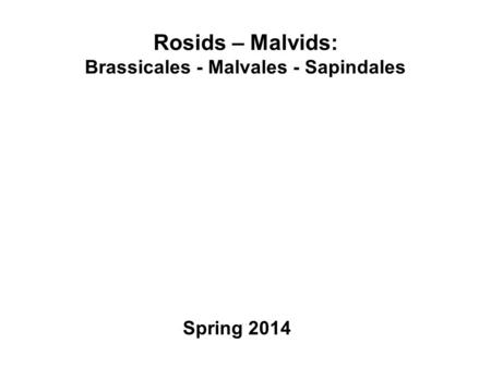 Rosids – Malvids: Brassicales - Malvales - Sapindales