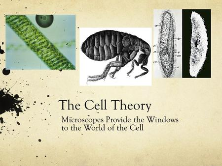 The Cell Theory Microscopes Provide the Windows to the World of the Cell.