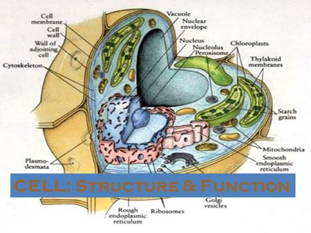 CELL: Structure & Function