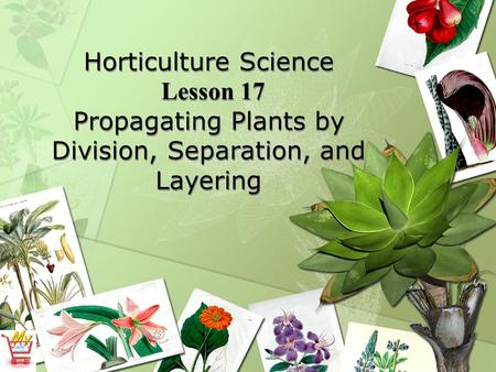 Horticulture Science Lesson 17 Propagating Plants by Division, Separation, and Layering.