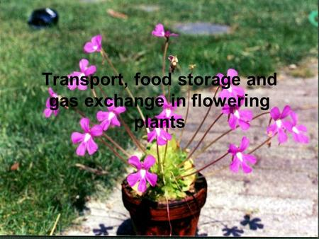 Transport, food storage and gas exchange in flowering plants