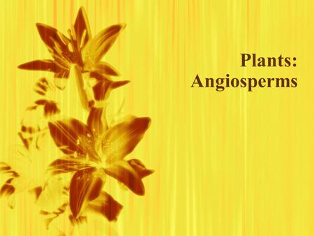 Plants: Angiosperms.