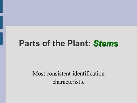 Stems Parts of the Plant: Stems Most consistent identification characteristic.