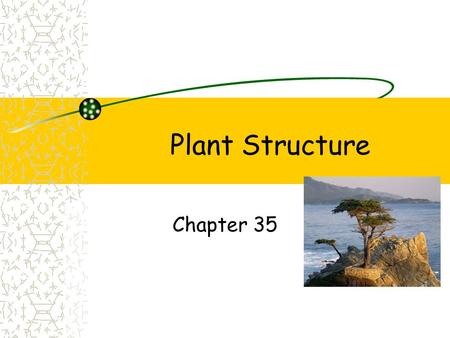 Plant Structure Chapter 35. Angiosperms Monocots Seed one cotyledon (seed leaf) Leaves parallel veins Roots fibrous Vascular tissue scattered Flower parts.