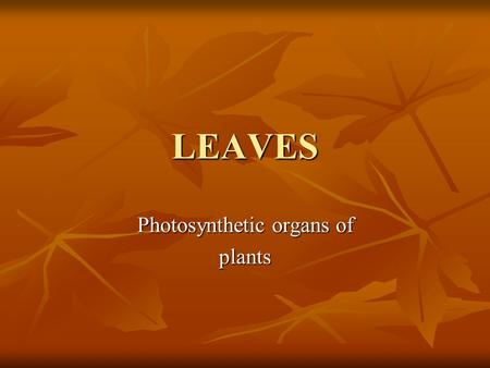 LEAVES Photosynthetic organs of plants. Basic Leaf Structure Axillary bud 