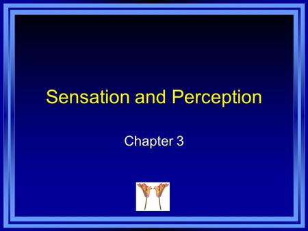 Sensation and Perception Chapter 3. Sensation Sensation - the activation of receptors in the various sense organs. Sensory receptors - specialized forms.