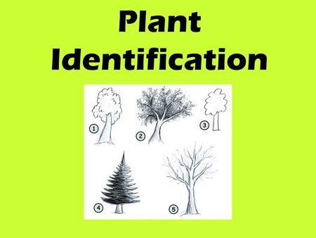 Plant Identification. Identify? Identifying a plant requires recognizing it by one or more characteristics and linking that recognition with a name, either.