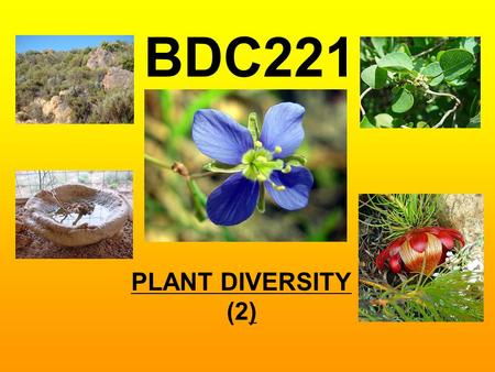 PLANT DIVERSITY (2) BDC221. PLANT DIVERSITY (2)  Higher plant nomenclature, identification and classification  Cladistic methodology  Classification.