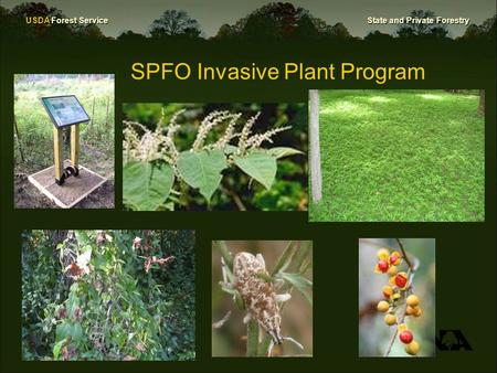 USDA Forest Service State and Private Forestry SPFO Invasive Plant Program.
