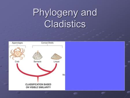 Phylogeny and Cladistics