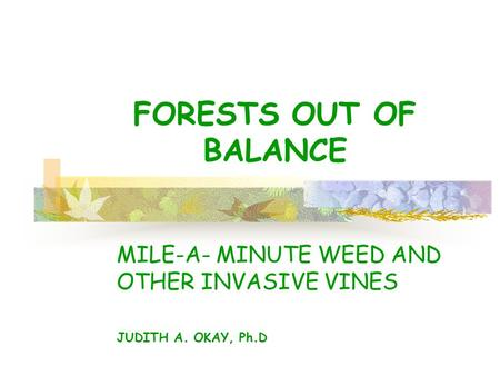 FORESTS OUT OF BALANCE MILE-A- MINUTE WEED AND OTHER INVASIVE VINES JUDITH A. OKAY, Ph.D.