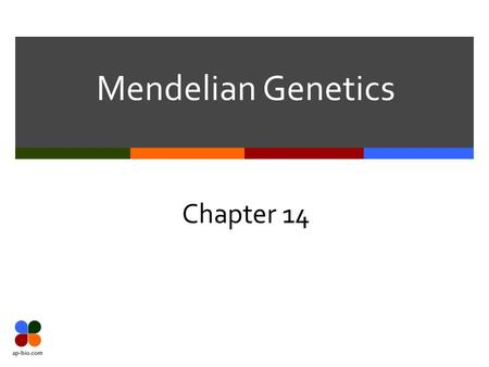 Mendelian Genetics Chapter 14. Slide 2 of 28 Mendel's Big Ideas  The Law of Segregation  The 2 alleles of a gene separate (segregate) during gamete.