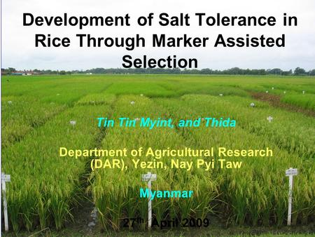 Development of Salt Tolerance in Rice Through Marker Assisted Selection Tin Tin Myint, and Thida Department of Agricultural Research (DAR), Yezin, Nay.